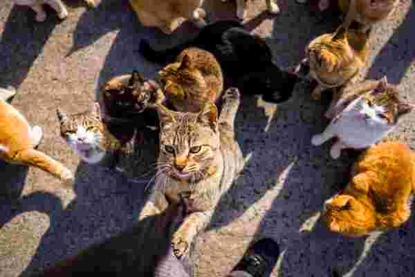 '不要试图放牧猫'-以及零工经济的其他4个领导技巧