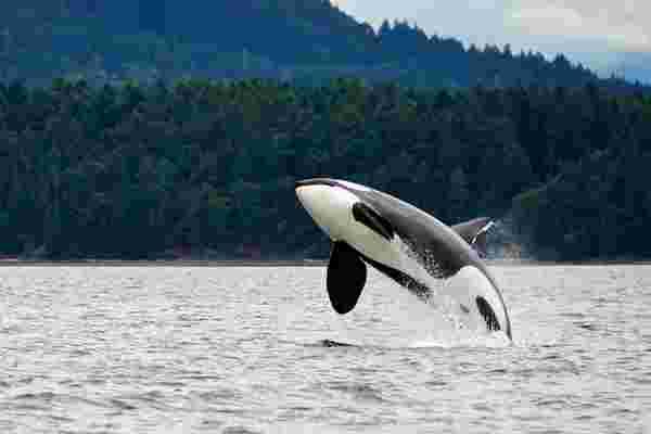 """在捕猎""""鲸鱼""""时找到你的灵魂"""