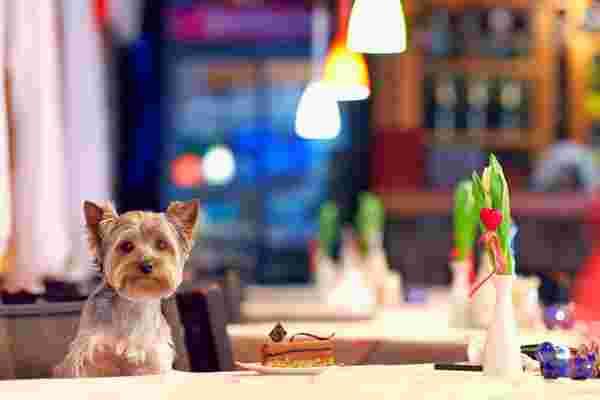 """因为经营企业是 """"鲁夫"""": 宠物行业企业家的5条经验教训"""